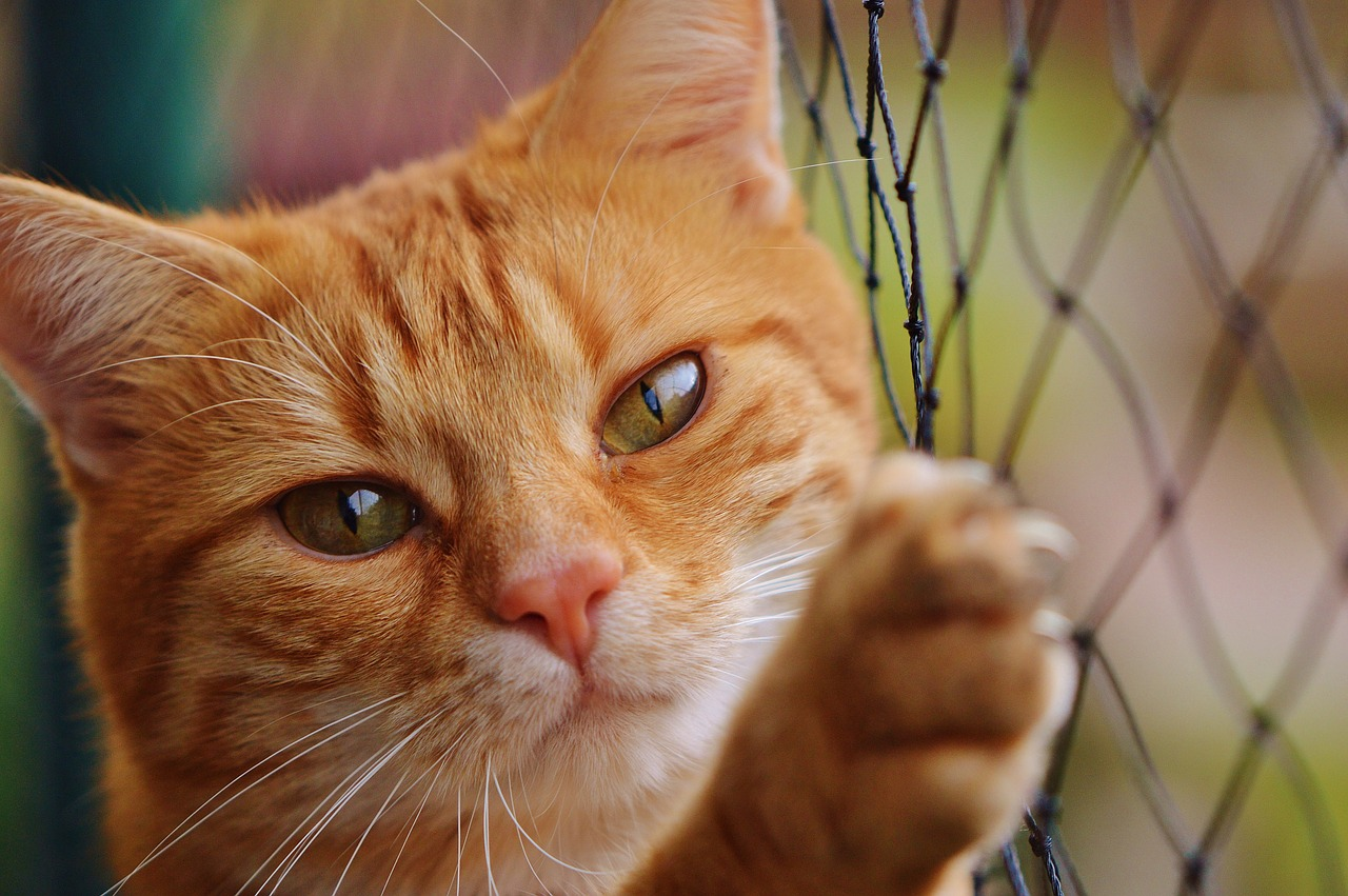 Problémy s chováním koček