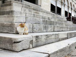 Historie koček