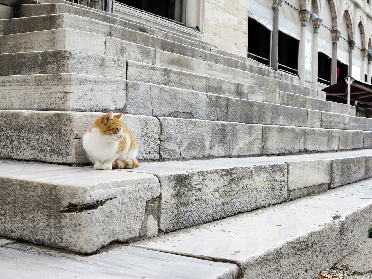 Krátký popis dlouhé historie koček