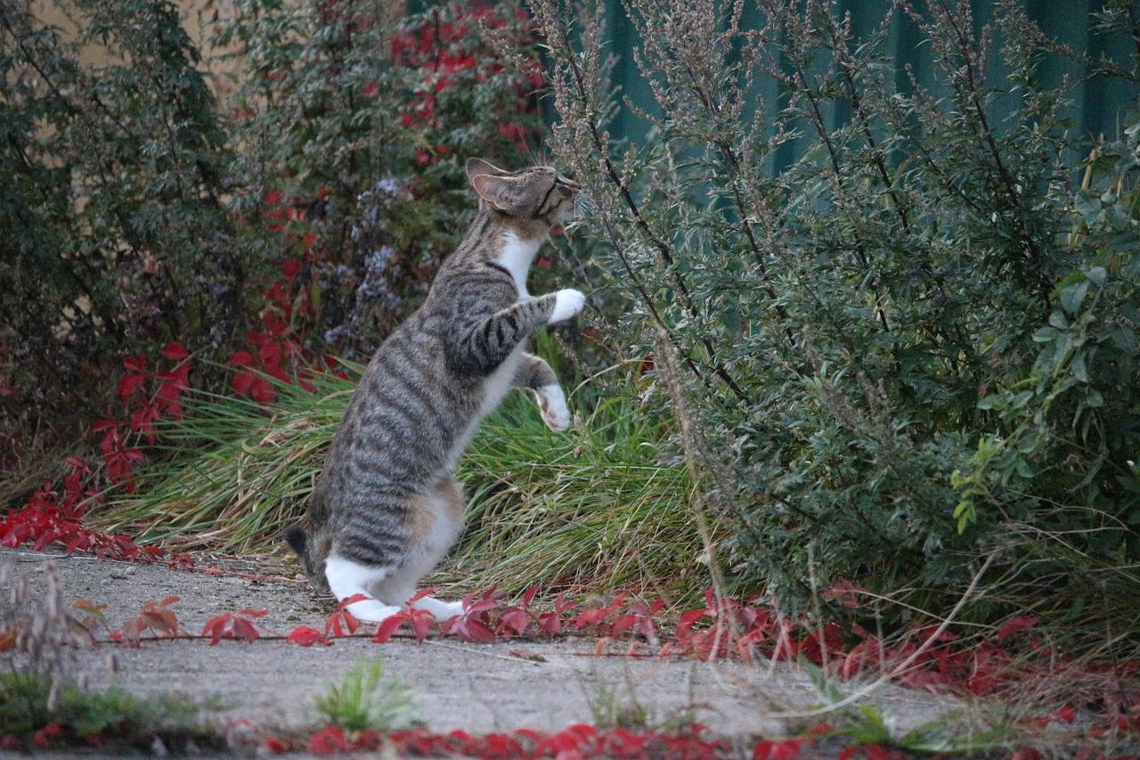 Kočky doma, nebo venku?